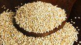 Quinoa: algumas razões para você sempre usá-la nos seus pratos